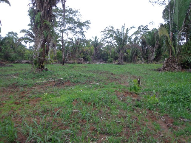 Fazenda 100hectares - Foto 11