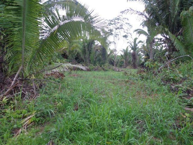 Fazenda 100hectares - Foto 19