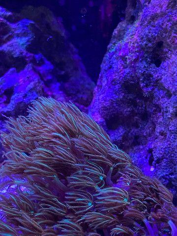Aquario marinho completo  - Foto 5