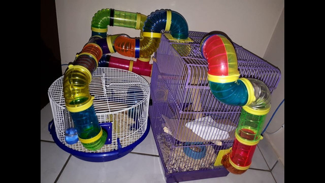 Gaiolas para Hamter!  - Foto 5
