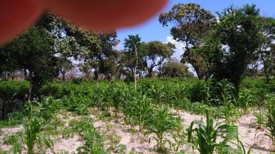 Fazenda em Itarema 386 hectares plantados de cajueiros,lagoa,poço,rio na extrema - Foto 5
