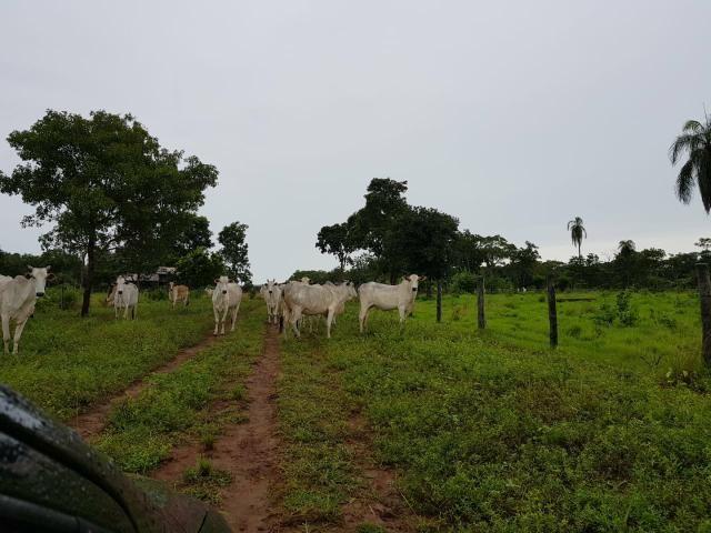Fazenda c/ 357 alqueires em Porto Esperidião - Foto 13