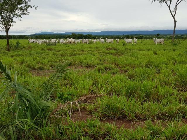 Fazenda c/ 357 alqueires em Porto Esperidião - Foto 14