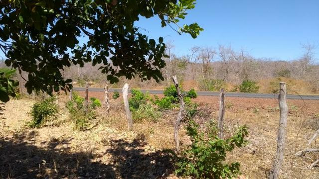 Área rural com 2 mil hectares em Piracuruca, agricultável e excelente logística! - Foto 3