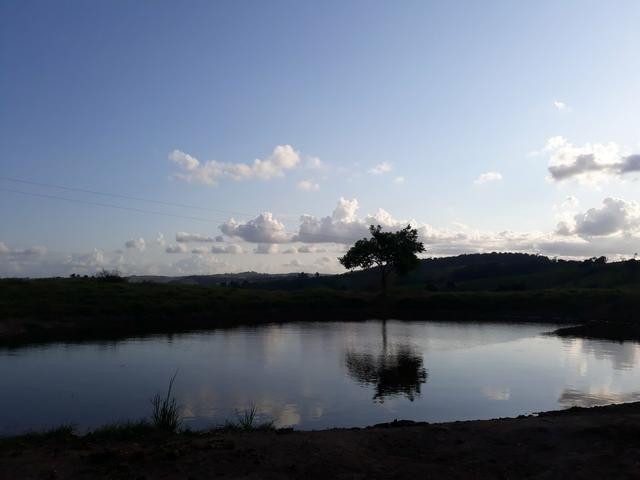 Vendo propriedade união dos Palmares - Foto 5