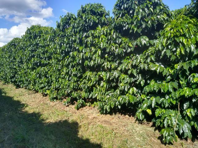 Fazenda com 83ha bem localizada, em Patrocínio!! - Foto 14