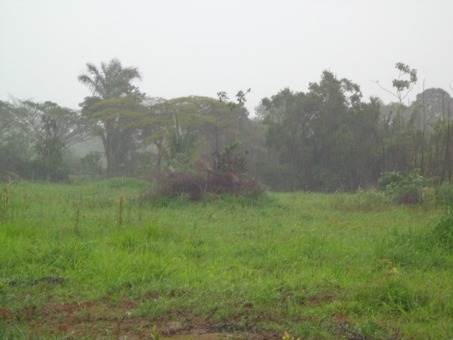 Fazenda 100hectares - Foto 12