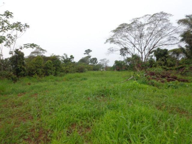 Fazenda 100hectares - Foto 14
