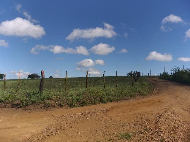 Propriedade de 8 hectares-toda cercada-com 2 casas, a 5 km de Apoti-PE - Foto 6