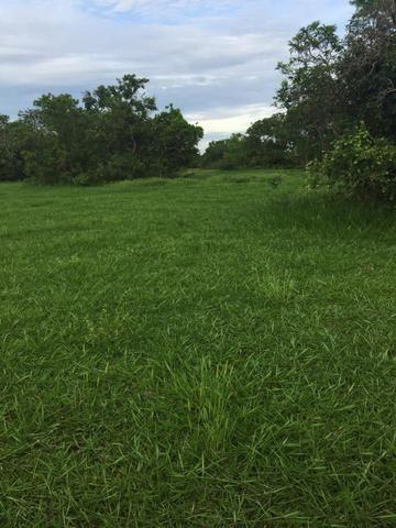 Fazenda 4.983 hectares em Livramento 35 km de Cuiabá - Foto 3