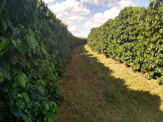 Fazenda com 83ha bem localizada, em Patrocínio!! - Foto 16