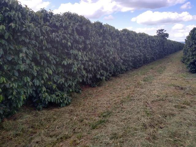 Fazenda com 83ha bem localizada, em Patrocínio!! - Foto 2