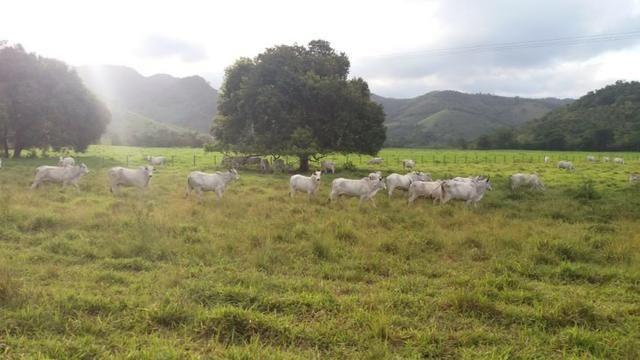 Fazenda com ótimo preço em Guarapari - Foto 3