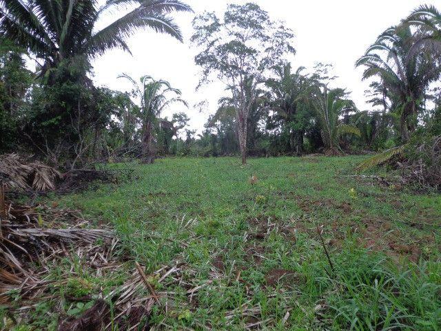 Fazenda 100hectares - Foto 9