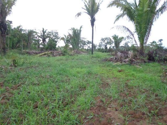 Fazenda 100hectares - Foto 15