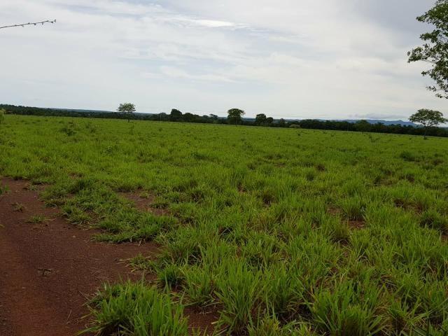 Fazenda c/ 357 alqueires em Porto Esperidião - Foto 15
