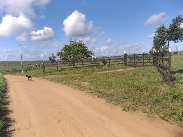 Propriedade de 8 hectares-toda cercada-com 2 casas, a 5 km de Apoti-PE - Foto 12