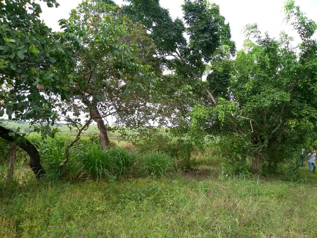 Vendo granja - Foto 12