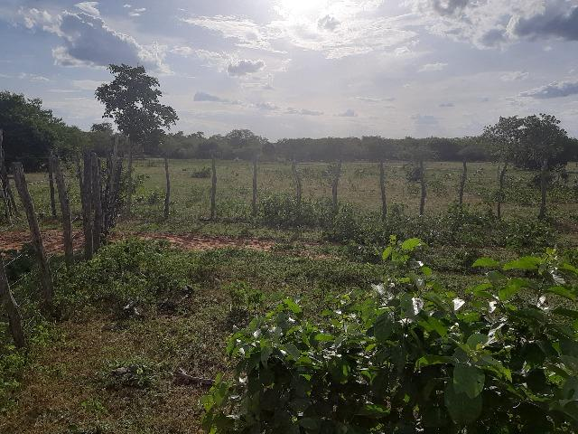 Vendo fazenda ou troco - Foto 5