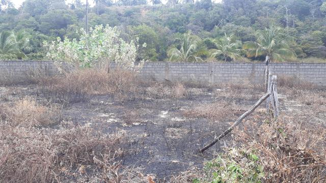Vendo e troco terreno em lagoa do pau Coruripe - Foto 4