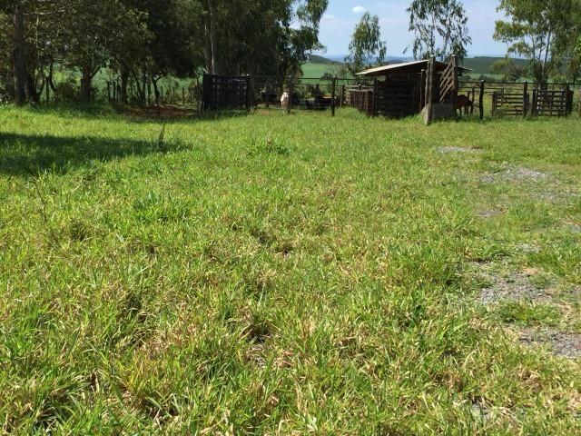 Fazenda em bambui 440 hectares 3.000.000.00 - Foto 11