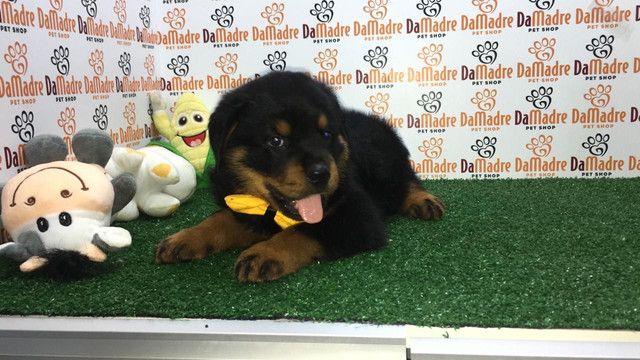 Rottweiler é no Da Madre Pet Shop