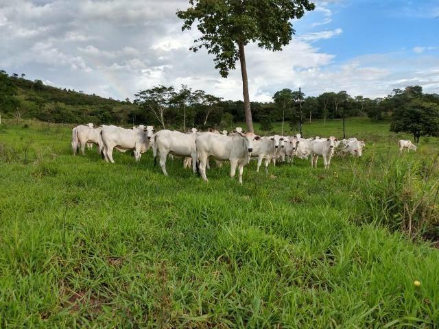 Fazenda em Guiratinga 680Hectares