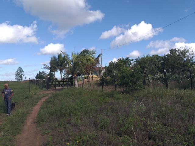 Propriedade de 8 hectares-toda cercada-com 2 casas, a 5 km de Apoti-PE - Foto 5