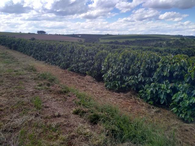 Fazenda com 83ha bem localizada, em Patrocínio!! - Foto 6