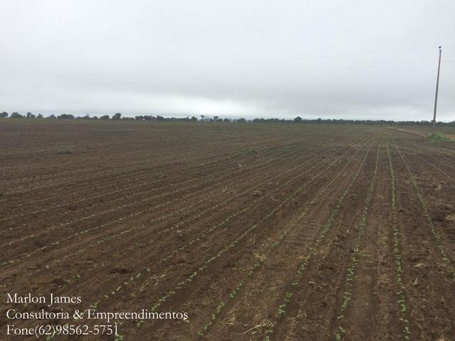 Fazenda em Mundo Novo! - Foto 9