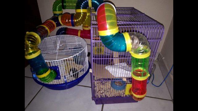 Gaiolas para Hamter!  - Foto 4