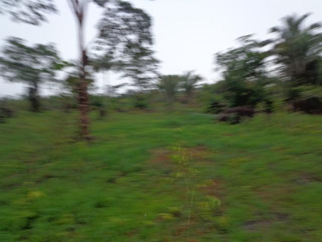 Fazenda 100hectares - Foto 20