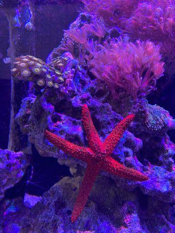 Aquario marinho completo  - Foto 3