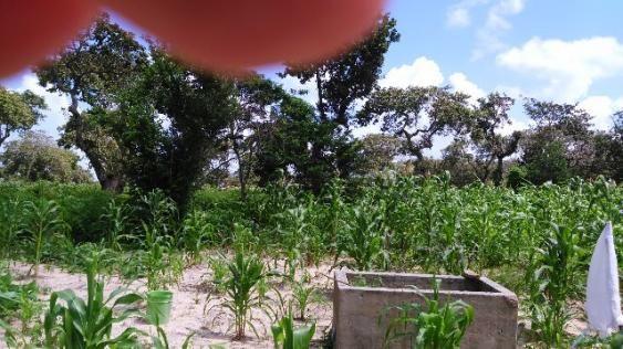 Fazenda em Itarema 386 hectares plantados de cajueiros,lagoa,poço,rio na extrema - Foto 6