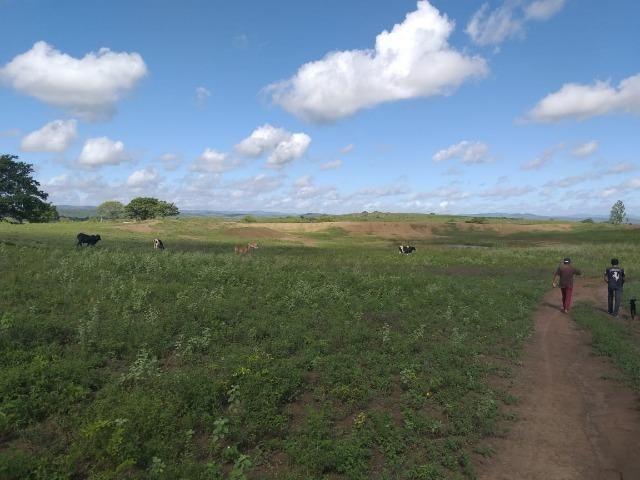 Propriedade de 8 hectares-toda cercada-com 2 casas, a 5 km de Apoti-PE - Foto 8