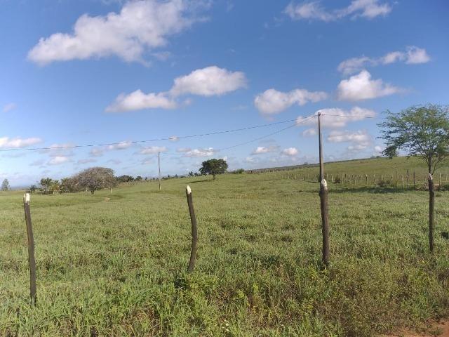 Propriedade de 8 hectares-toda cercada-com 2 casas, a 5 km de Apoti-PE - Foto 11