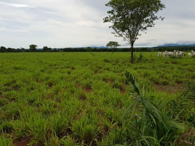 Fazenda c/ 357 alqueires em Porto Esperidião - Foto 6