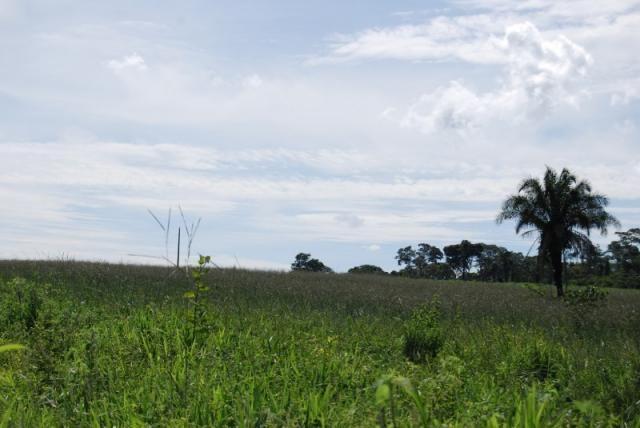 Fazenda com 12 alqueires em Terezópolis-GO  - Foto 19