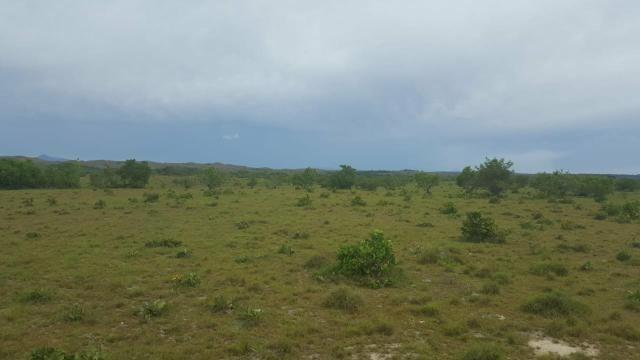 Fazenda de 468 Hectares em Boa Vista - Foto 4