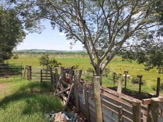 8271   Fazenda à venda em ZONA RURAL, Ivailandia - Foto 9