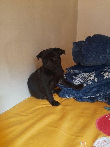 Pug Black filhote - Foto 2