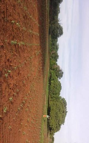Propiedade 64 hectares - Foto 4