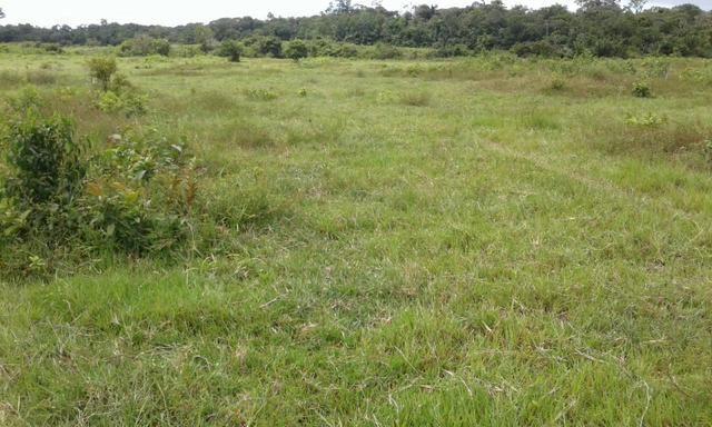 Fazenda em Roraima -São Luiz - Foto 5
