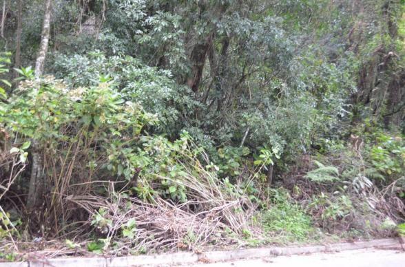 Terreno à venda, 1600 m² por R$ 2.000.000,00 - Vila Suzana - Canela/RS - Foto 3