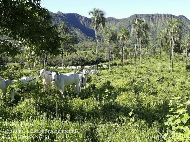 Fazenda em Niquelandia! - Foto 6