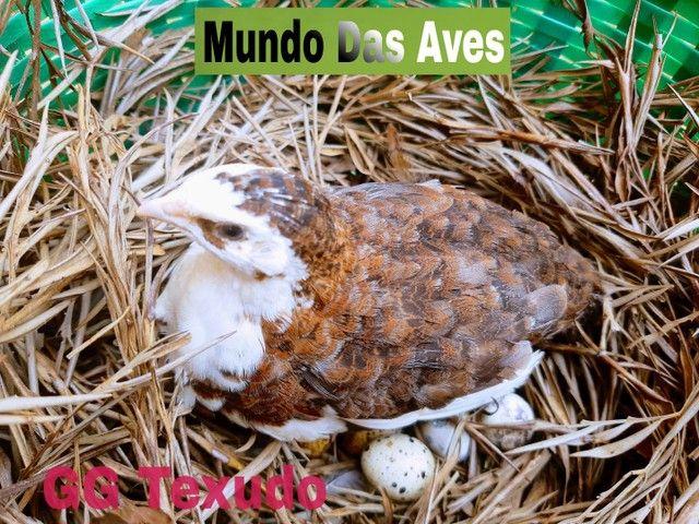 Criatório Mundo Das Aves - Foto 4