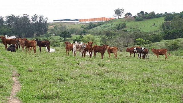 G. Fazenda Pronta / carta de crédito rural