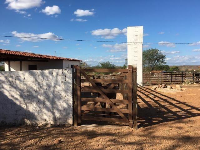 Ótima propriedade de 377 hectares,em Jataúba-PE, por apenas R$ 650 mil - Foto 3