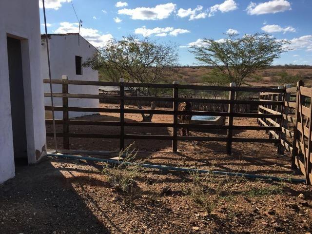 Ótima propriedade de 377 hectares,em Jataúba-PE, por apenas R$ 650 mil - Foto 17