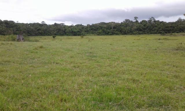 Fazenda em Roraima -São Luiz